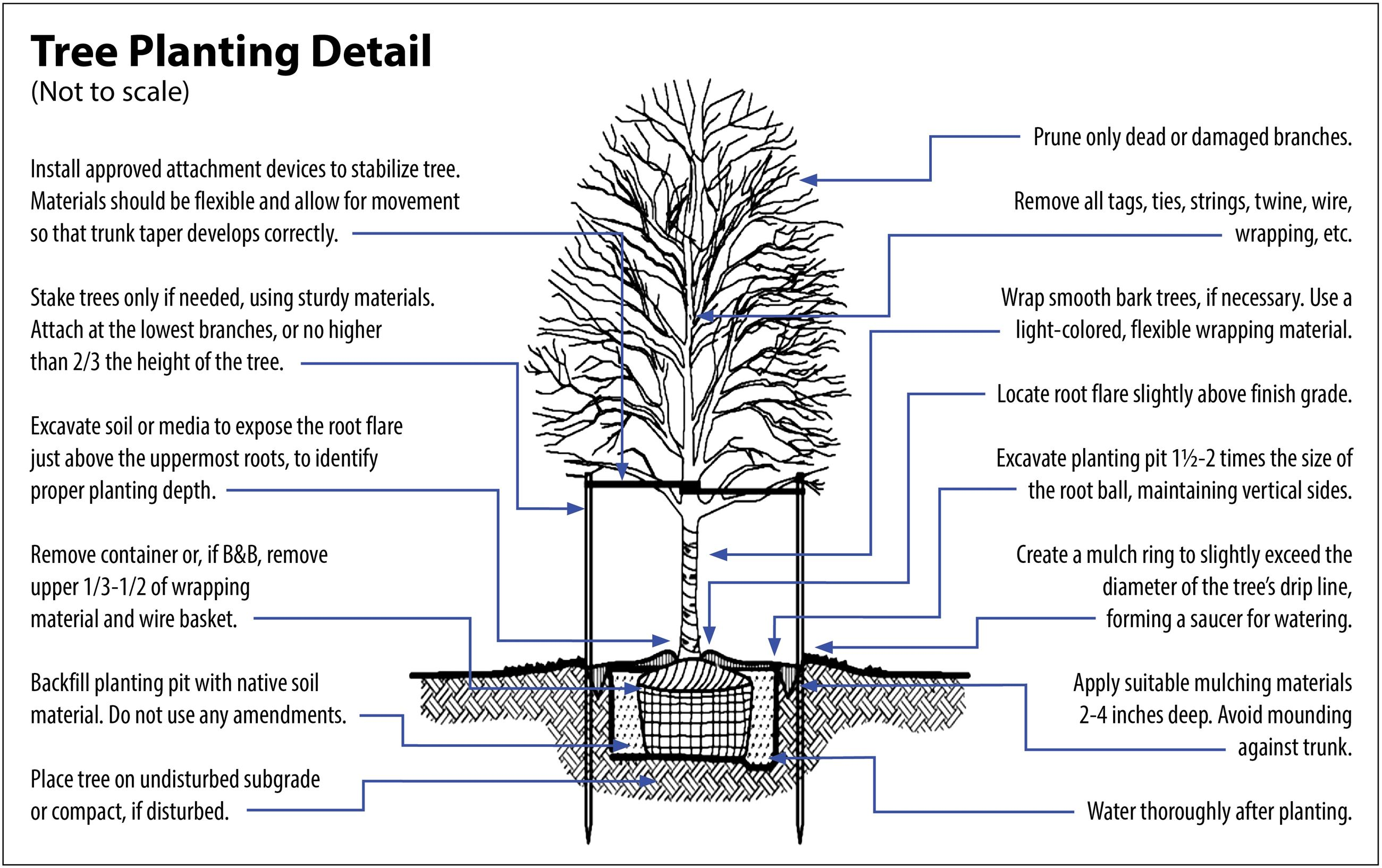 Tree Planting Diagram-Purdue