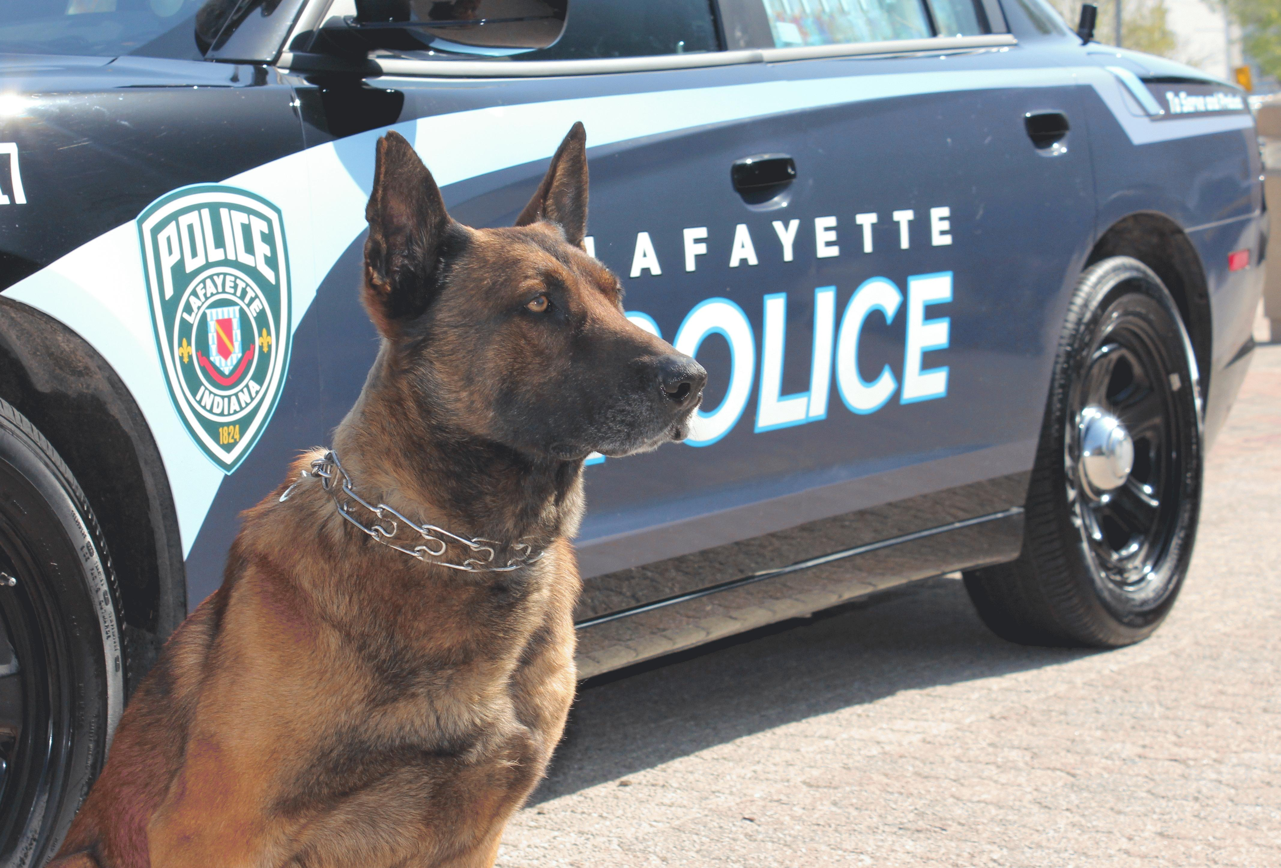K9 Tico Sitting Next to a Police Car