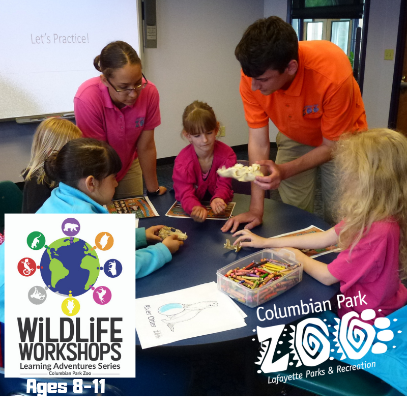 Wildlife Workshops