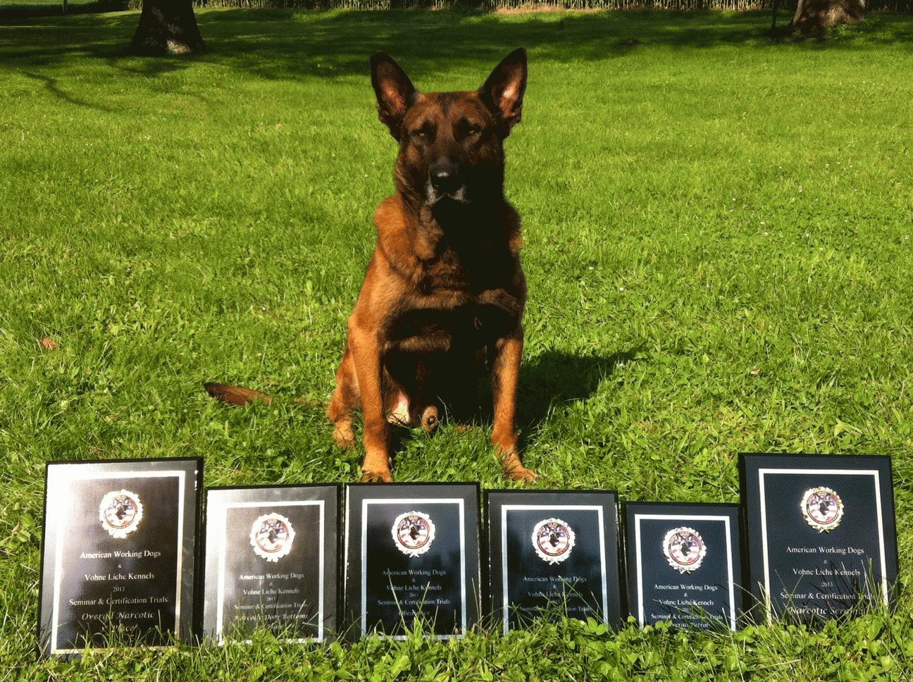 K9 Tico With a Row of Plaques in Front of Him
